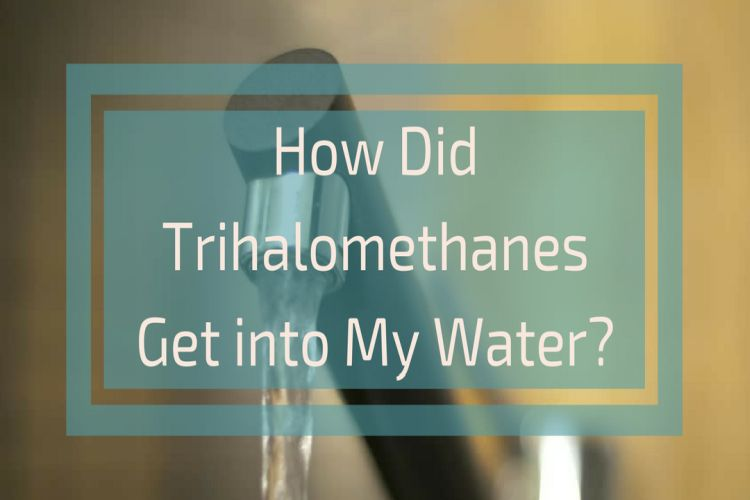 Water Filtration at Point-of-Use to Remove Trihalomethanes